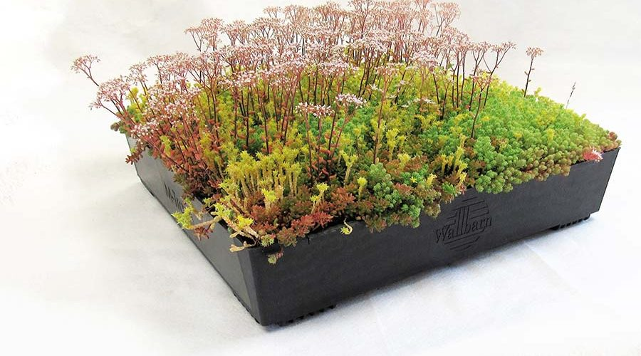 Green Roofs That Are Box-fresh for Instant Installations